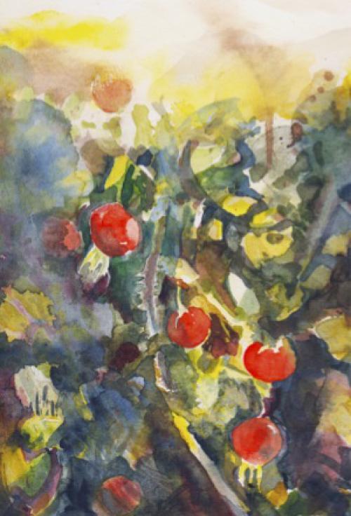 rozenbottels